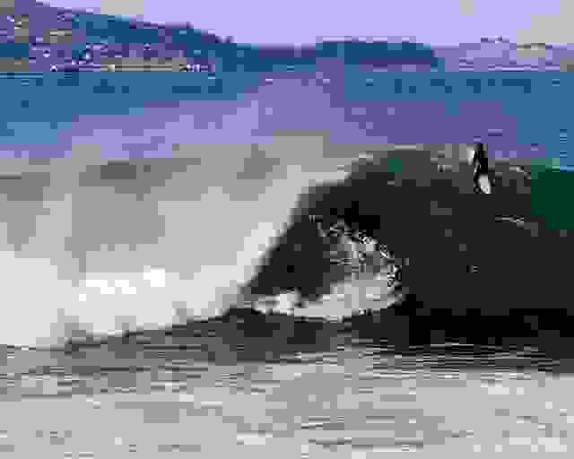 Surfing the break at Fort Point, beneath the Golden Gate Bridge. #surfing #sanfrancisco #sanfranciscobay #surfsup
